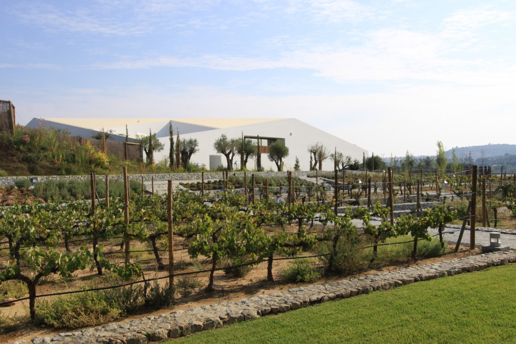 The vinyards at L'and