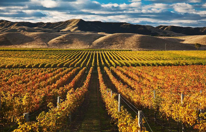Travel From Home: Take Trip Around The World With Red Wine
